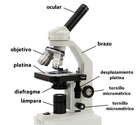 Partes de un Microscropio